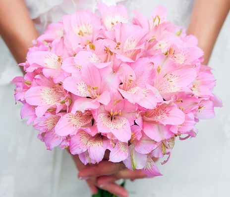 Alstromeria_Bouquet.13113318_std