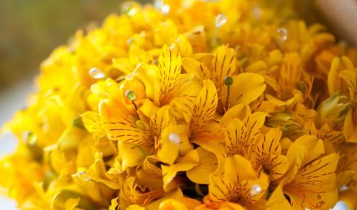 alstroemeria-bouquet-closeup